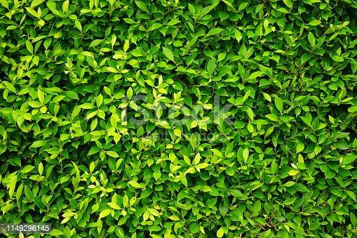 639809128 istock photo greenery leaf wall garden 1149296145