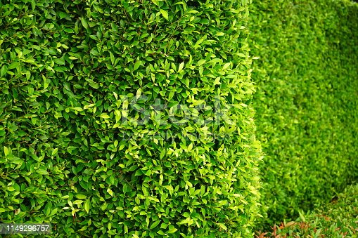 639809128 istock photo greenery leaf wall garden 1149296757