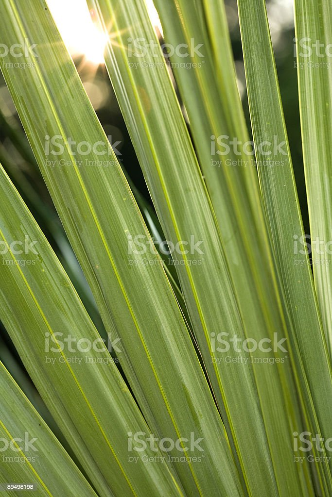 Verde lussureggiante foto stock royalty-free