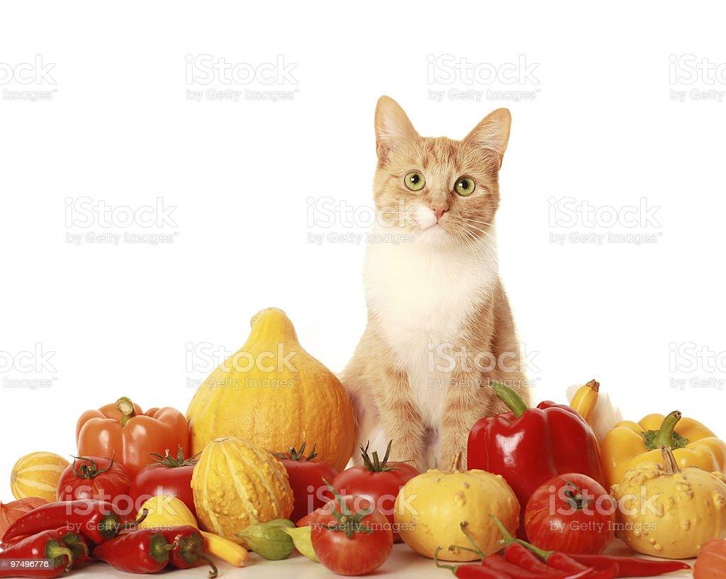 green-eyed cat royalty-free stock photo