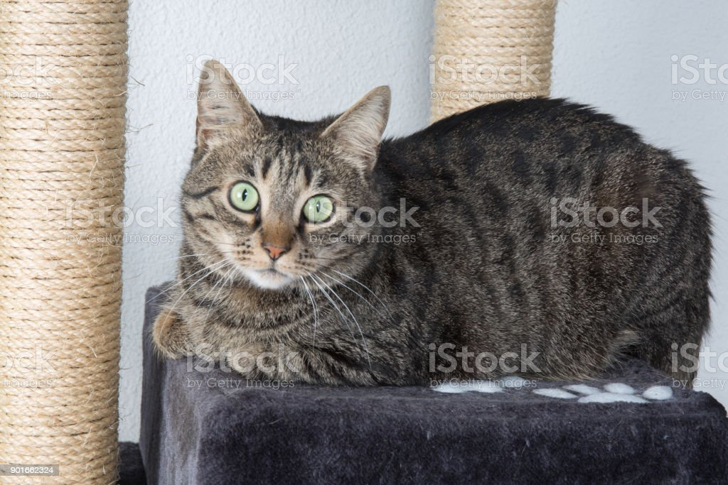 green-eyed cat surprised stock photo
