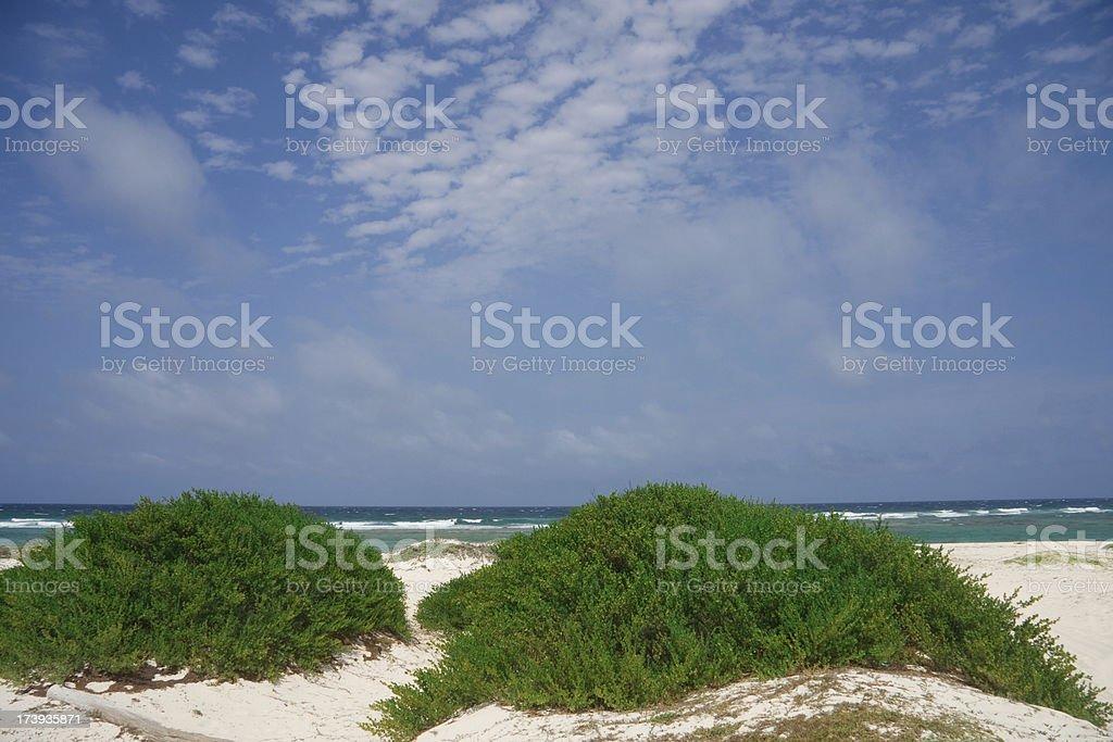 Greenfield Beach Aruba royalty-free stock photo