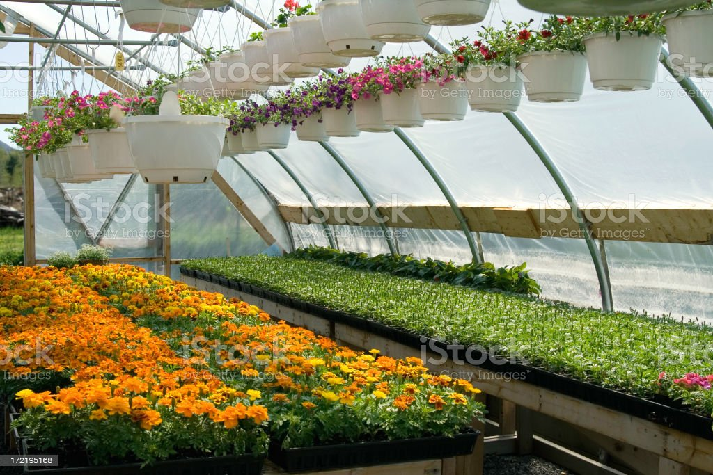 Greenhouse 2 royalty-free stock photo