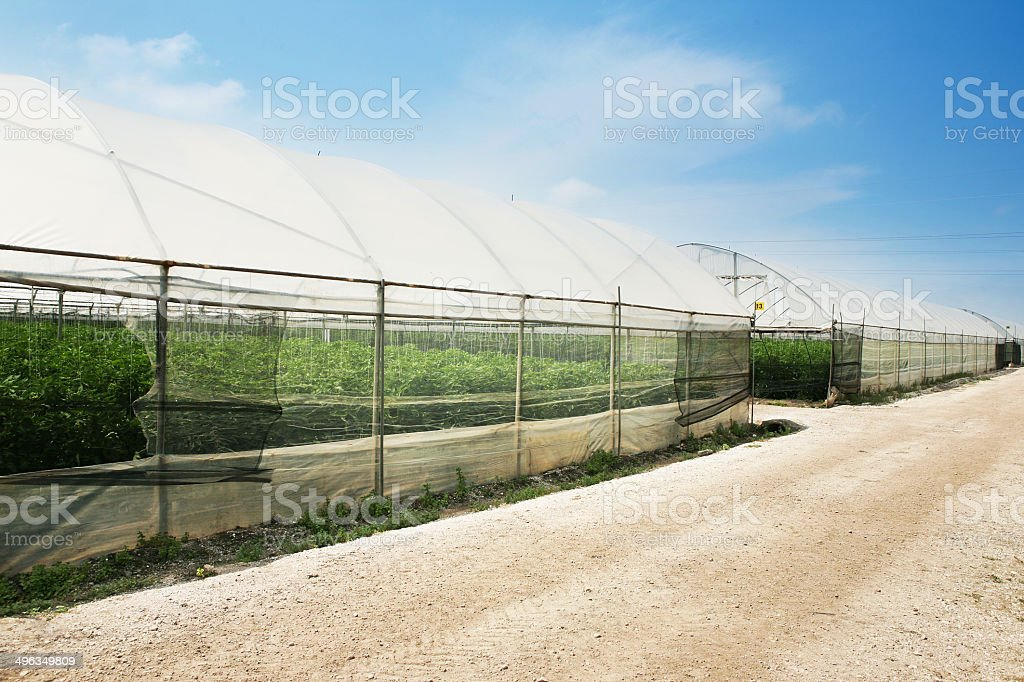 greenhouse agriculture royalty-free stock photo