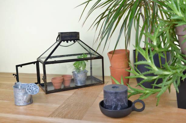 invernadero y planta de la casa en la decoración interior en un mueble de madera - foto de stock