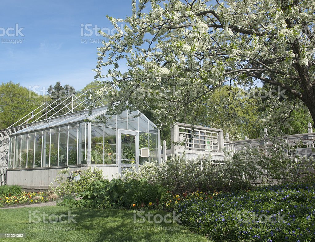 Greenhouse and Spring Flowers stock photo