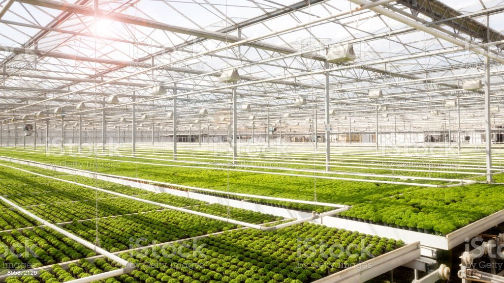 Greenhouse cultivation stock photo