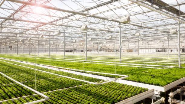 greenhouse cultivation - оранжерея стоковые фото и изображения
