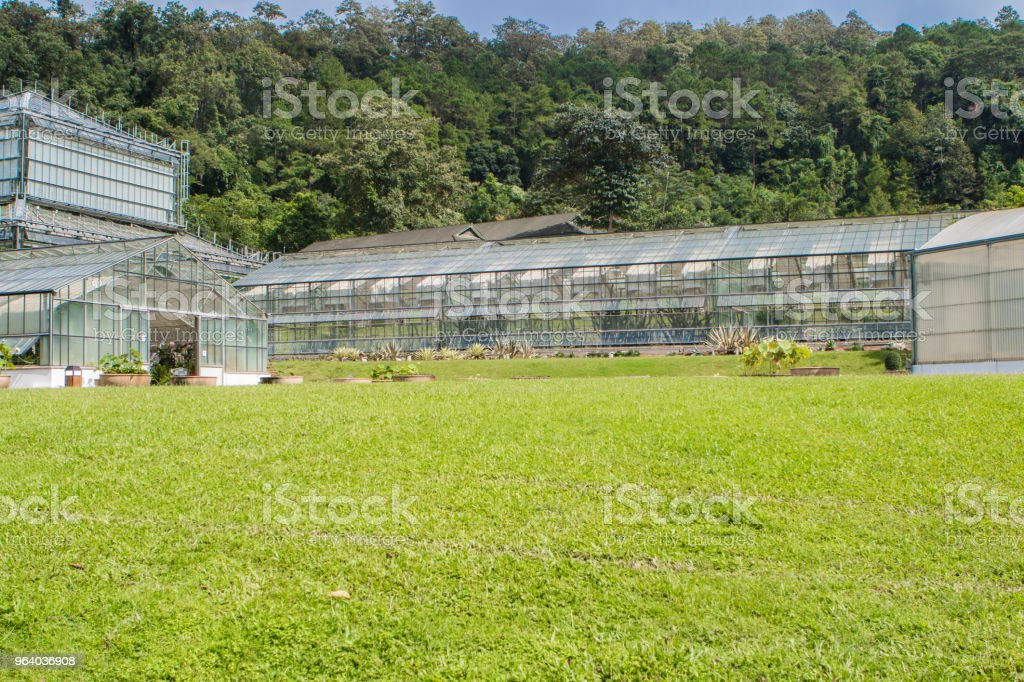 Greenhouse cultivation - Royalty-free Agriculture Stock Photo
