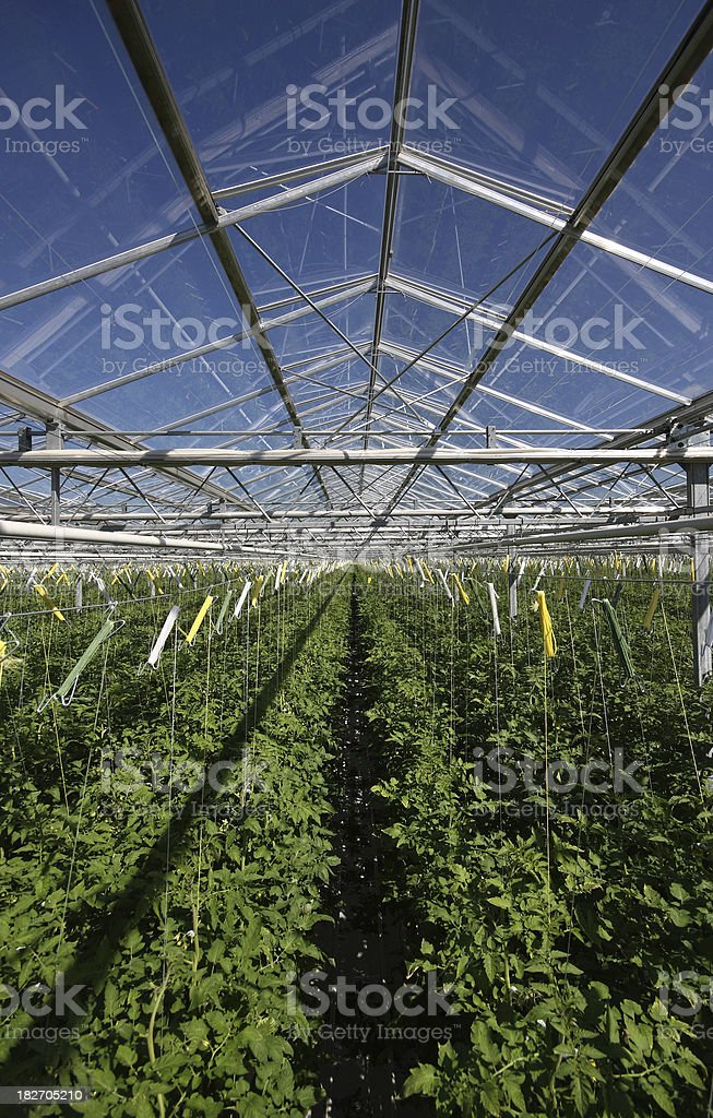 greenhouse detail royalty-free stock photo