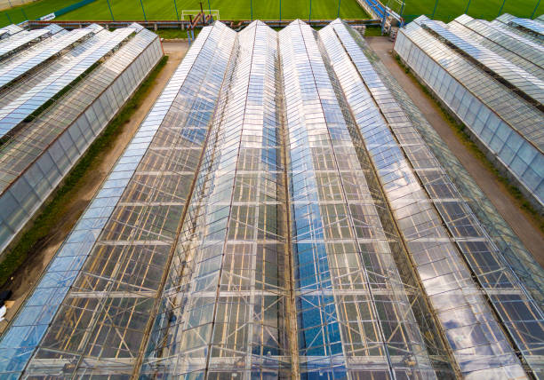 Greenhouse for flowers, vegetables and marijuana growing. Modern agriculture from above. Camera flight over garden. stock photo