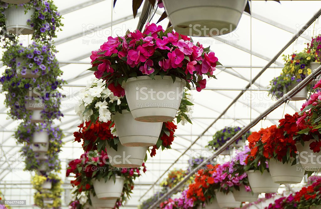 Greenhouse full of Flowers royalty-free stock photo