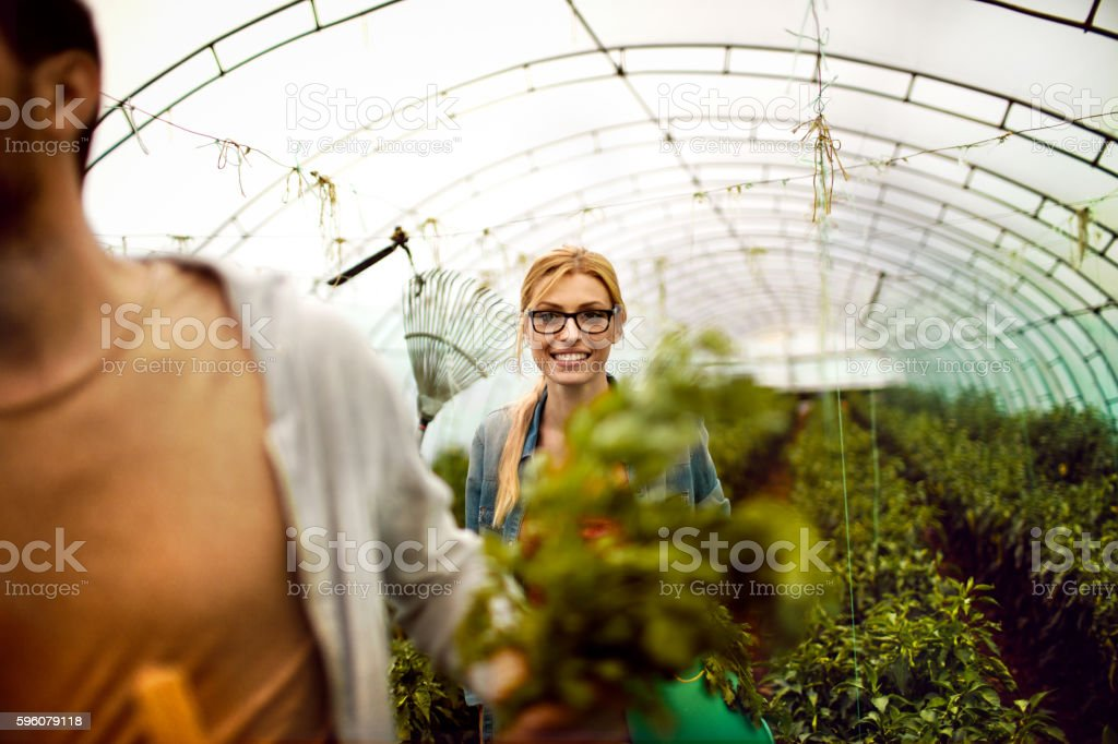 Greenhouse gardeners royalty-free stock photo