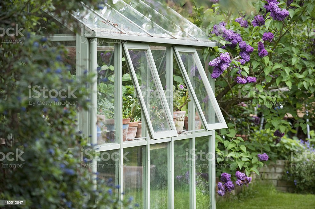 Greenhouse In Back Garden stock photo
