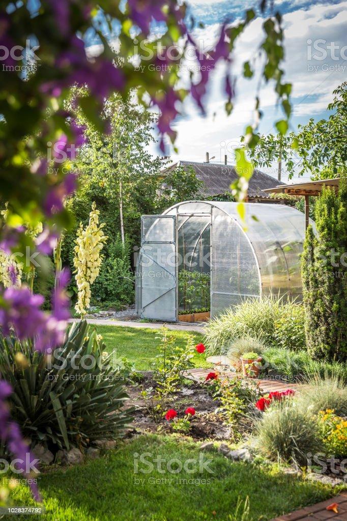 Greenhouse in back garden with open door stock photo