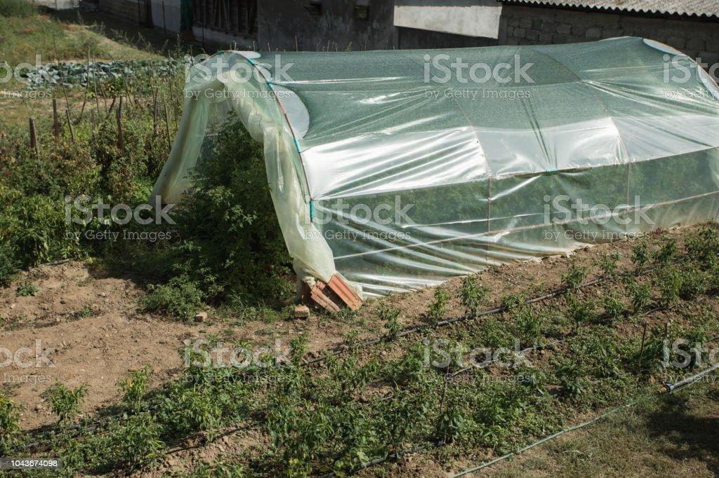 Greenhouse in backyard stock photo