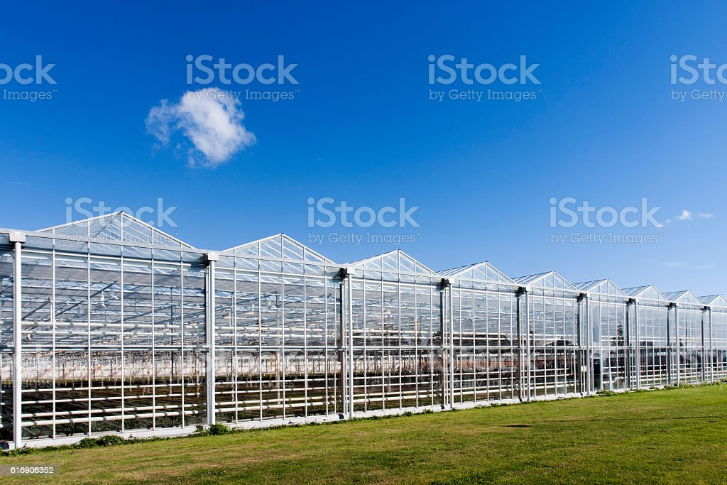 Greenhouse in Westland in the Netherlands stock photo