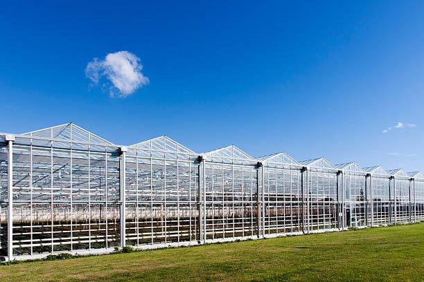greenhouse in westland in the netherlands - оранжерея стоковые фото и изображения