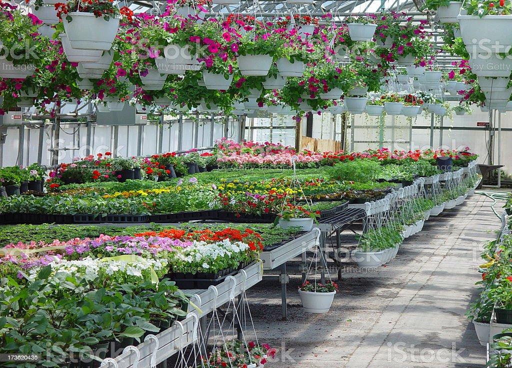 Greenhouse Interior #2 royalty-free stock photo