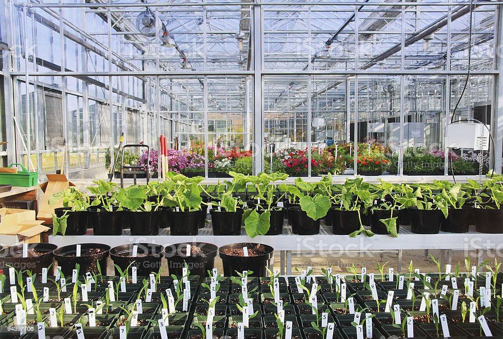 Greenhouse Interior royalty-free stock photo