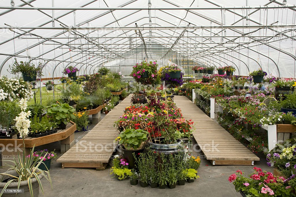 Greenhouse interior with ornamental flowers stock photo