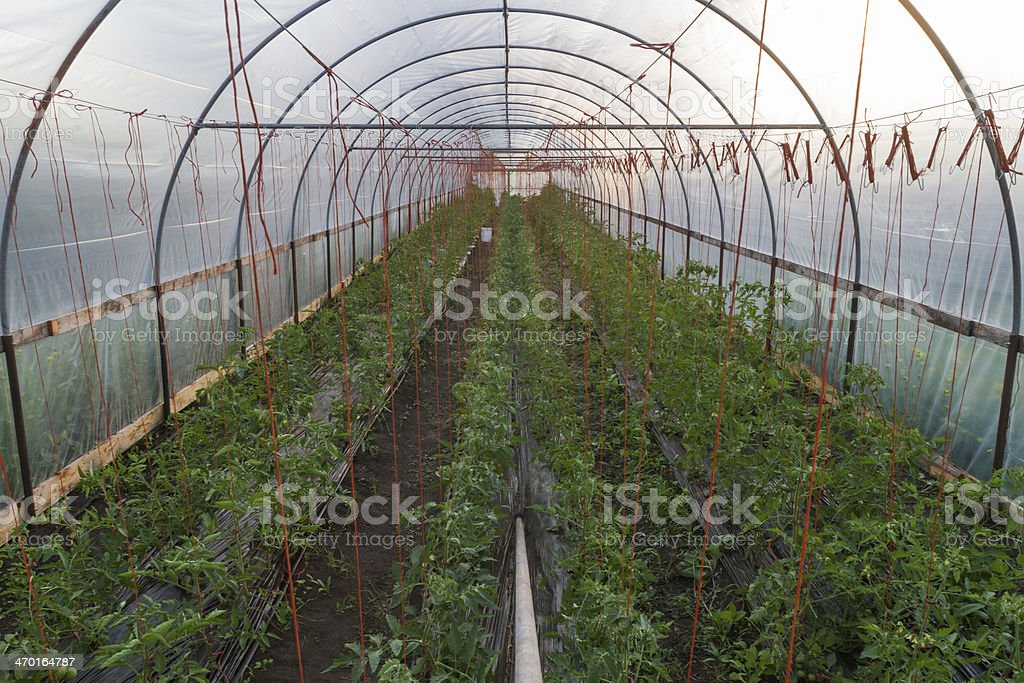 Greenhouse Organic Farm royalty-free stock photo