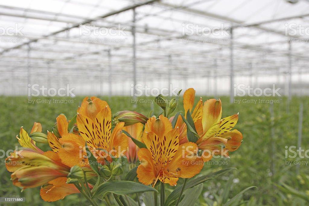 Greenhouse # 7 stock photo