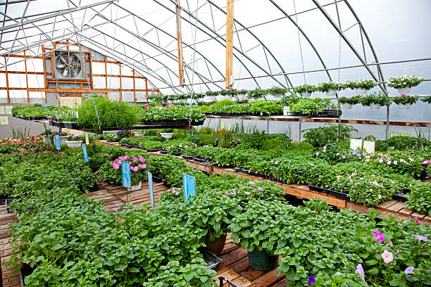 greenhouse - spring stock photos and pictures