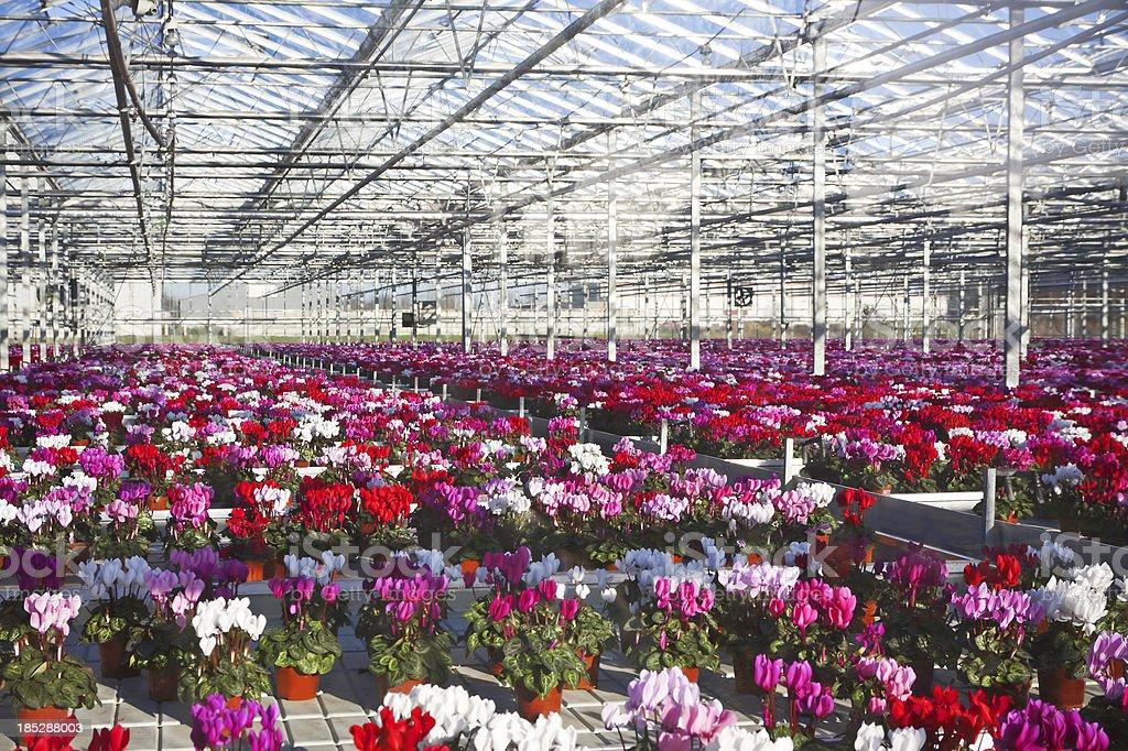 Greenhouse # 32 royalty-free stock photo