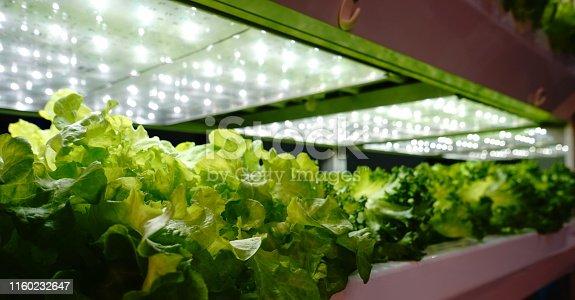 LED Light, Growth, Lighting Equipment, Illuminated, Agriculture