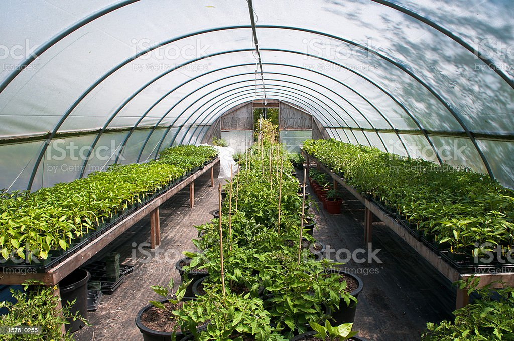 Greenhouse plantings royalty-free stock photo