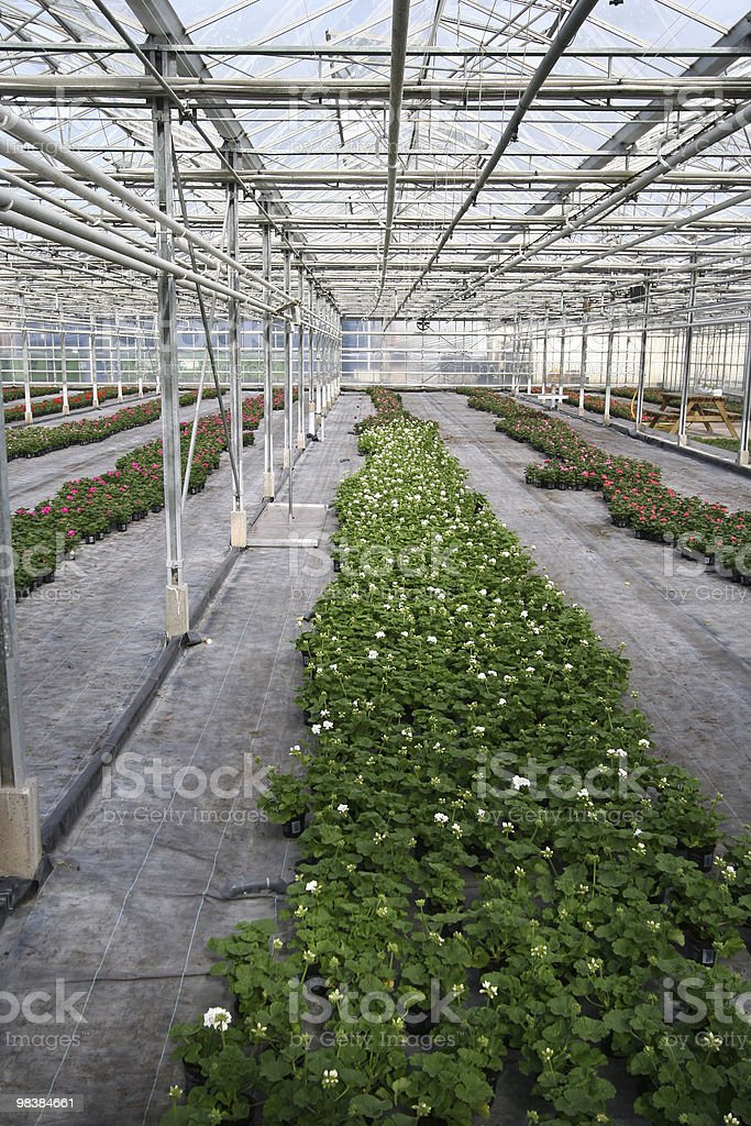 Greenhouse Plants royalty-free stock photo
