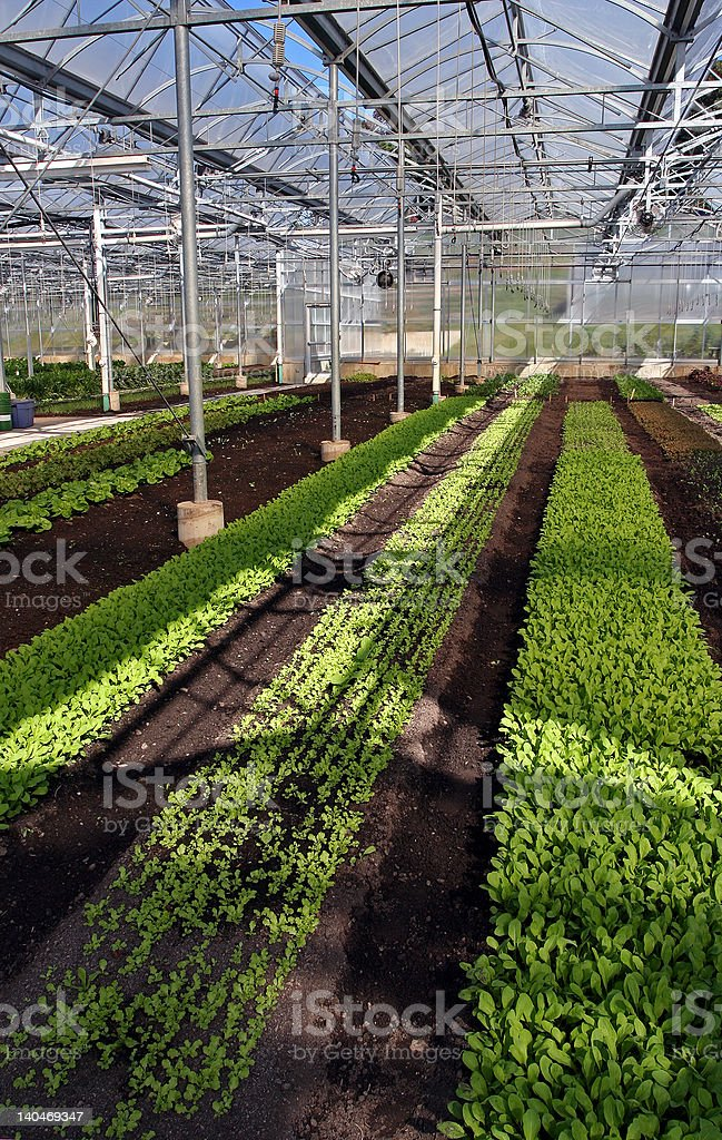 Greenhouse Rows stock photo