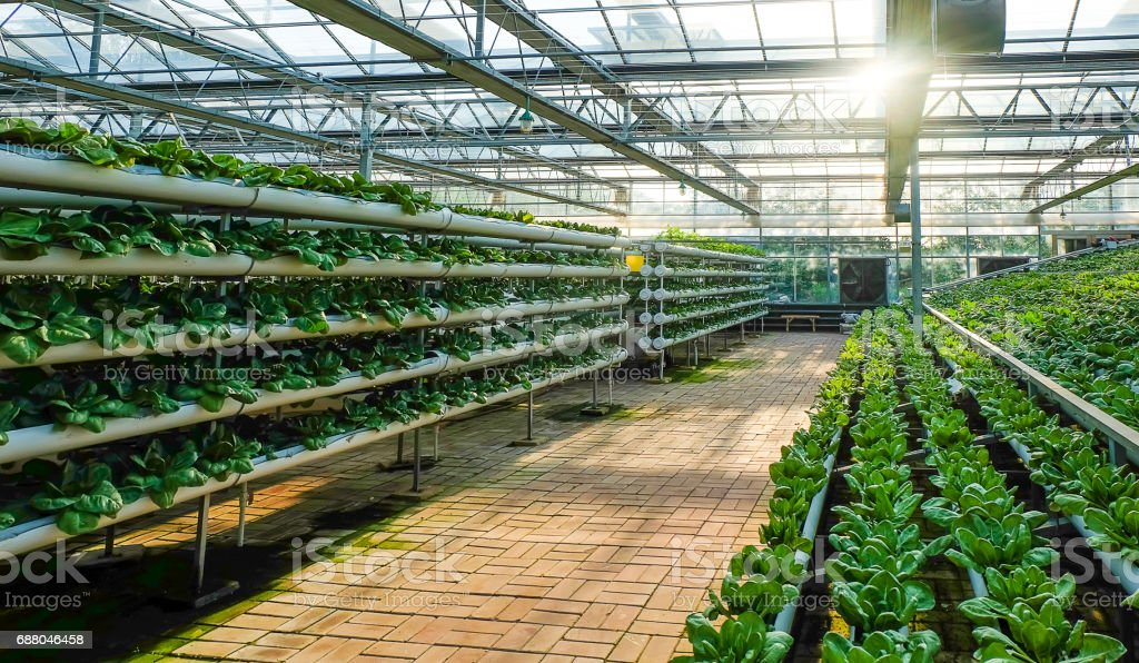 greenhouse vegetable factory greenhouse vegetable factorygreenhouse vegetable factory Agricultural Field Stock Photo