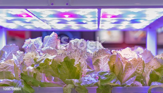 istock Greenhouse vegetables Plant with Led Light Indoor Farm Technology 1058758864
