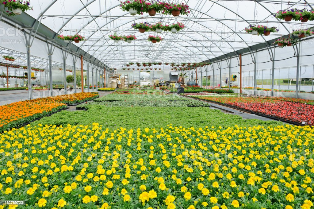 Greenhouse view royalty-free stock photo