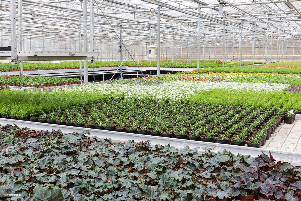 Greenhouse with cultivation of several plants and flowers stock photo