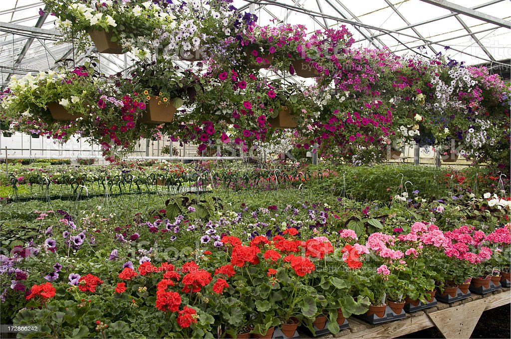 Greenhouse with hanging baskets royalty-free stock photo