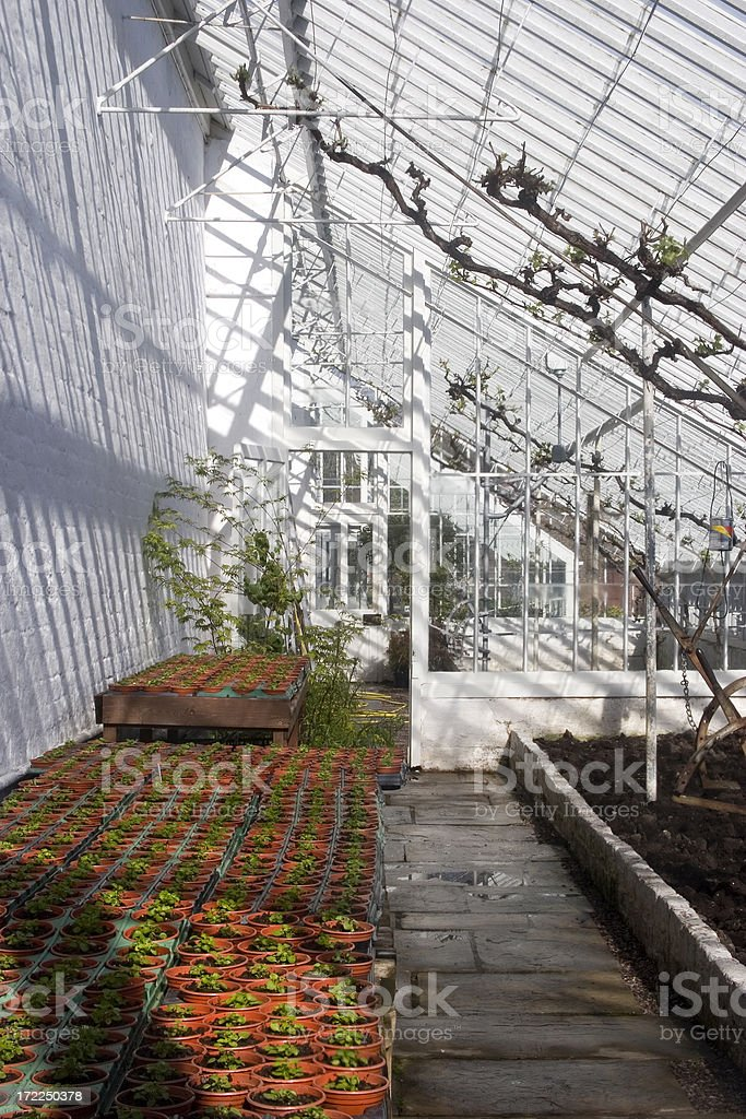Greenhouse with seedlings royalty-free stock photo