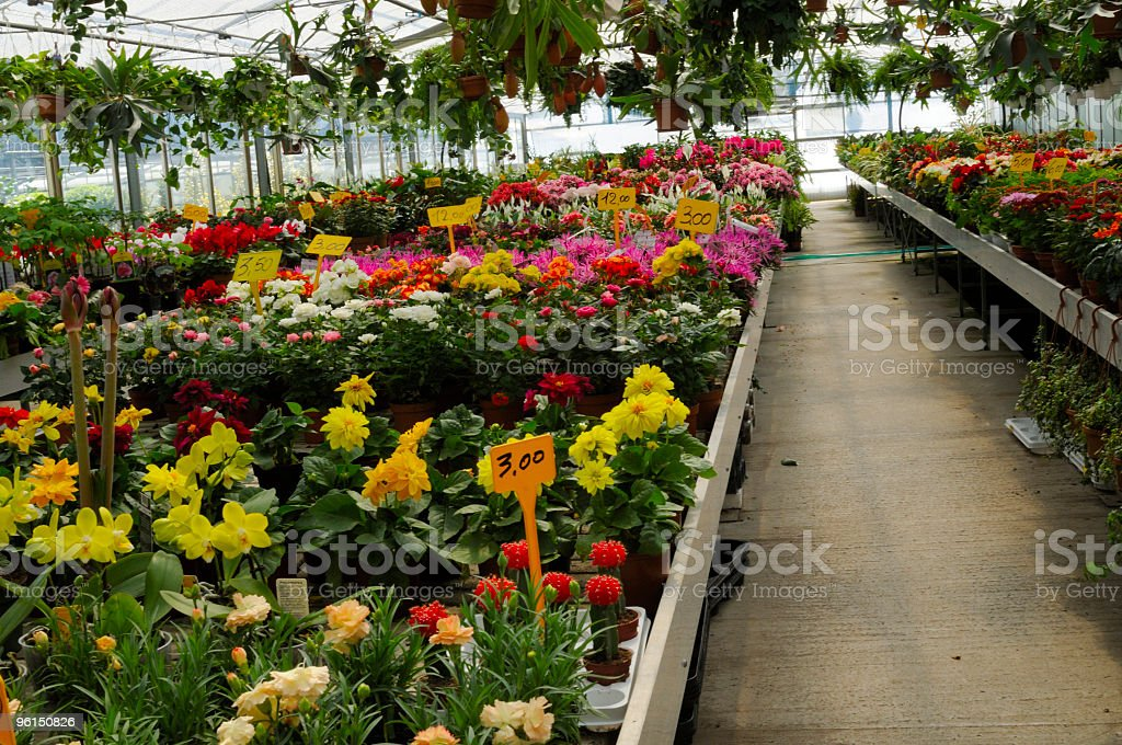 Greenhouse with spring flowers royalty-free stock photo