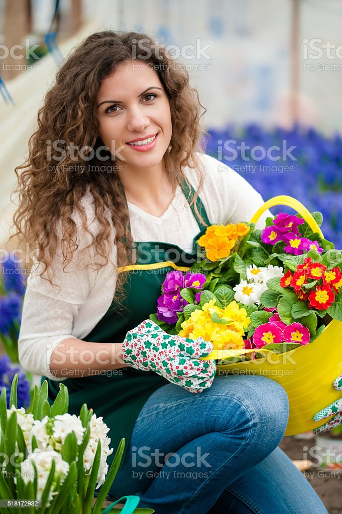 Greenhouse with white and violet hyacinth flowers stock photo