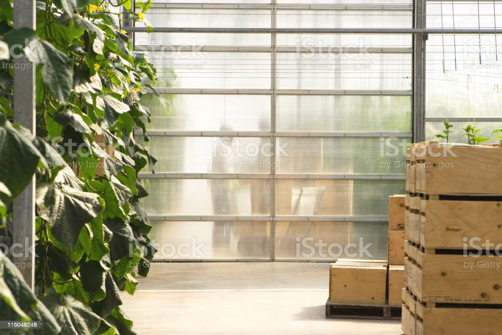 Greenhouse Workers royalty-free stock photo