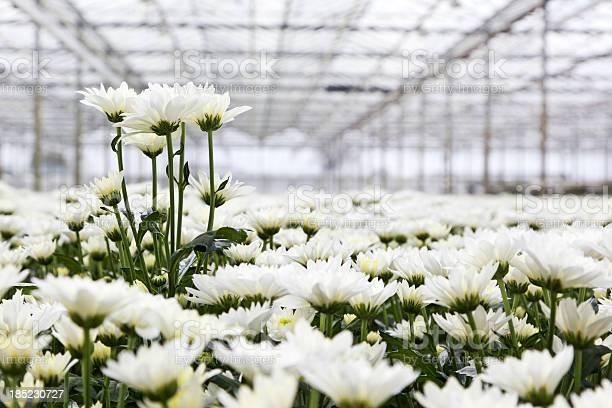 Greenhouse xxl picture id185230727?b=1&k=6&m=185230727&s=612x612&h=7xig6cqijgaurhohhf4thtatiwlcad3b8fk6zjrrw9o=