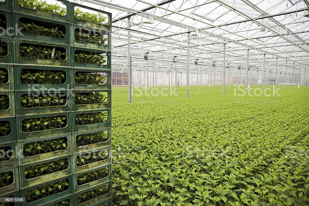 Greenhouse # 18 XXXL royalty-free stock photo