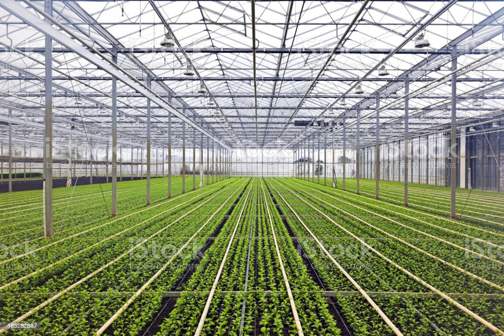 Greenhouse # 40 XXXL stock photo