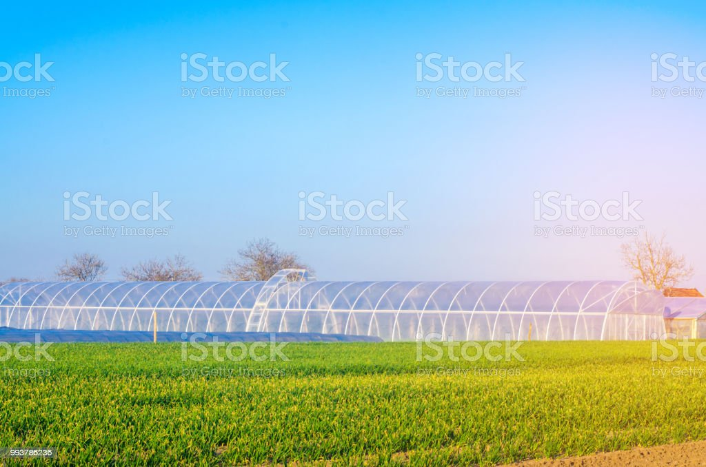 estufas no campo de mudas de culturas, frutas, legumes, empréstimos aos agricultores, fazendas, agricultura, zonas rurais, complexo agro-industrial. culturas de inverno. foco seletivo - foto de acervo