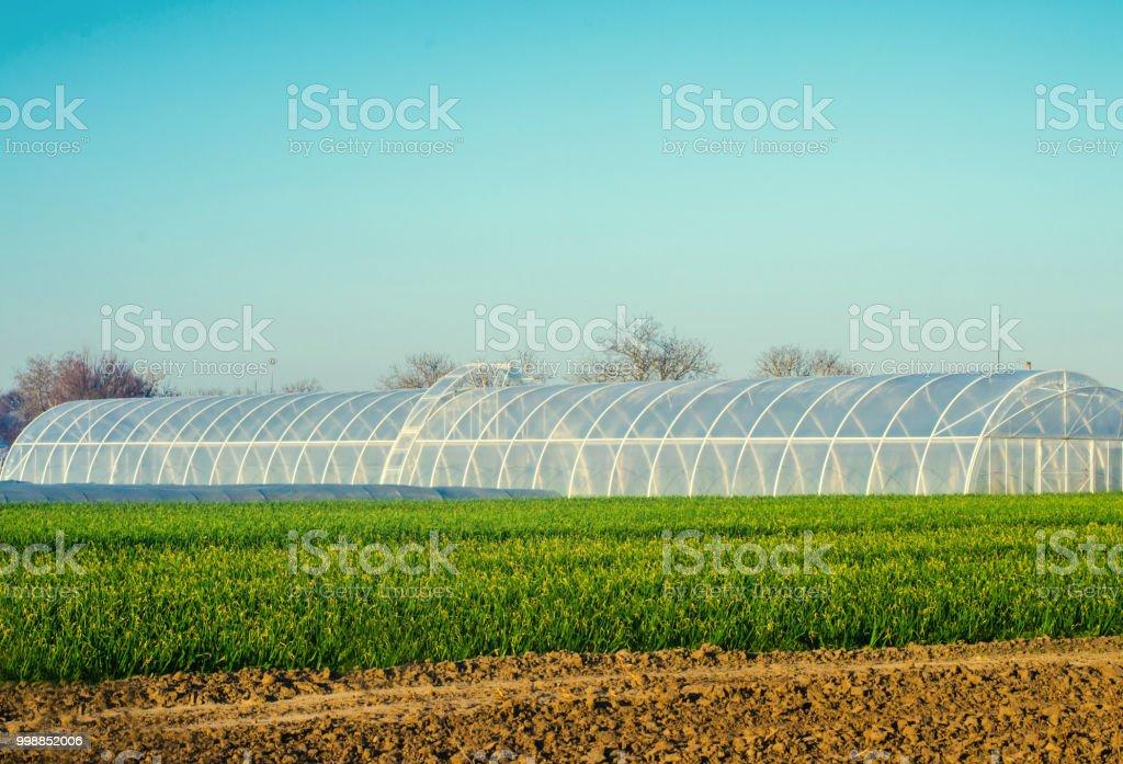 estufas no campo de mudas de culturas, frutas, legumes, empréstimos aos agricultores, fazendas, agricultura, zonas rurais, complexo agro-industrial. culturas de inverno - foto de acervo