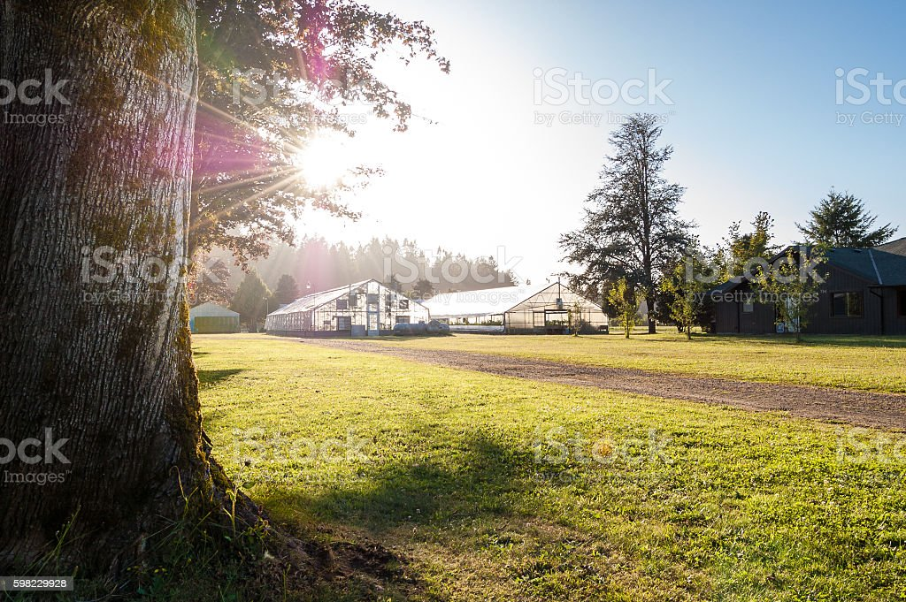 Greenhouses on a sunny Oregon farm foto royalty-free