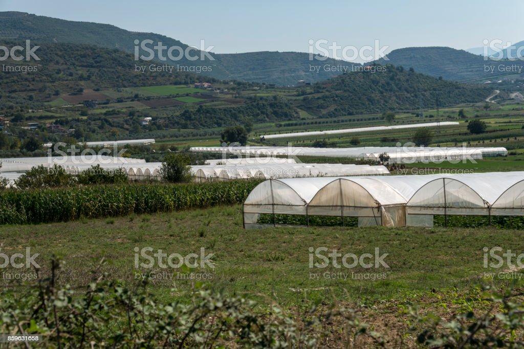 Greenhouses plantations in Albania stock photo
