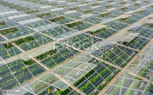 Aerial view of greenhouse area with vegetables